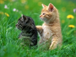 2 Kittens Wallpaper Cats Animals