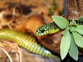 A Green Snake 2