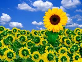 A Little Sunshine to Brighten Day