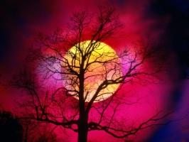 Alive Colors