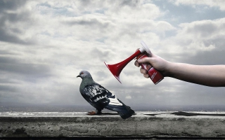 Anti Bird Spray