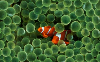 Water Wallpaper Fish Wallpapers For Free Download About 3 042 Wallpapers