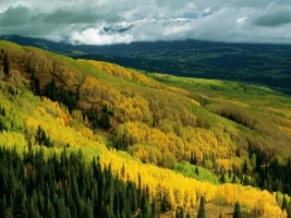 Aspen Forest in Early Fall Wallpaper Colorado World