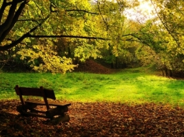 Autumn bench Wallpaper Autumn Nature