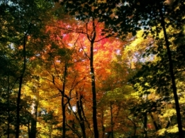 Autumn Forest Wallpaper Autumn Nature