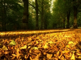 Autumn Leaves Carpet Wallpaper Autumn Nature