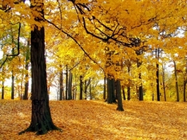 Autumn Trees Wallpaper Autumn Nature