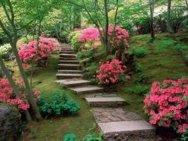 Azaleas Japanese Garden