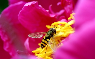 Bee & Flower in HD