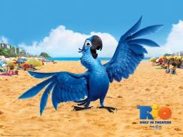 Blu Bird in Rio