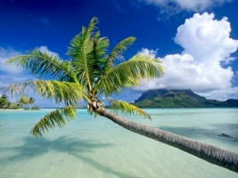 Bora Bora Wallpaper Beaches Nature