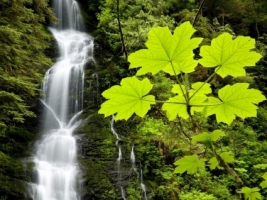 Boulder River Falls Wallpaper Rivers Nature