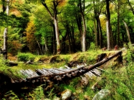 Broken Bridge Wallpaper Landscape Nature