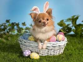 Bunny Wishes You a Happy Easter