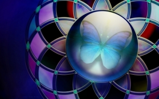 Butterfly Colours Wallpaper Abstract 3D