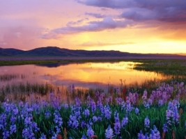 Camas Prairie Wallpaper Landscape Nature