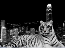 City Tiger Wallpaper Tigers Animals