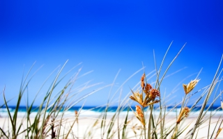 Clear Beach Sky