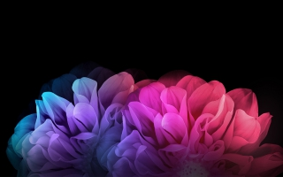 Colorful Flowers Dark Background