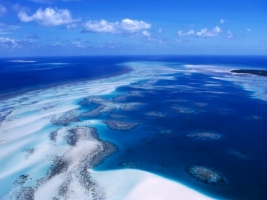 Coral Reef Wallpaper Australia World