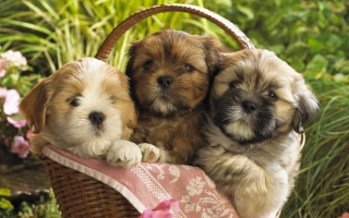 Cute Puppies 2