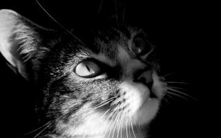 Dark Cat View