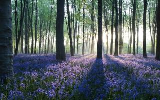 Dawn in Forest