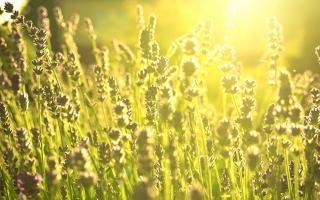 Daylight Green Fields