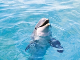 Dolphin Wallpaper Dolphins Animals