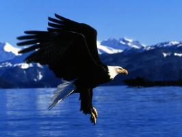 Easy Landing  Alaska