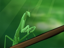 Emerald Hunter Wallpaper Abstract 3D