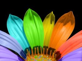 Flower Color Petals