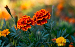 Flower Pair