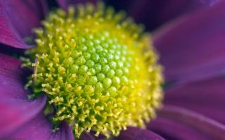 Flower Zoom
