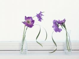 Flowers Decoration 3