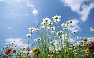 Flowers Sky Glade