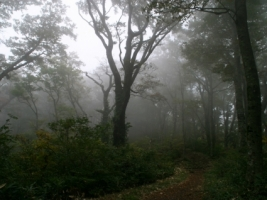 Forest Wallpaper Wallpapers For Free Download About 3 018 Wallpapers