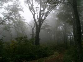 Foggy Forest Wallpaper Landscape Nature