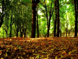 Forest Leaves Wallpaper Autumn Nature