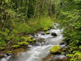 Forest River Wallpaper Rivers Nature