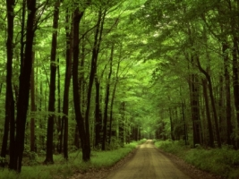 Forest road Wallpaper Landscape Nature