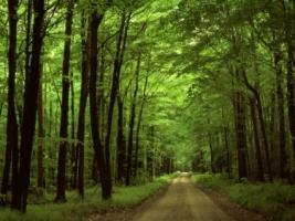 Forest road Wallpaper Landscape Nature