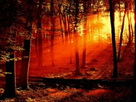 Forest Sunrise Wallpaper Landscape Nature