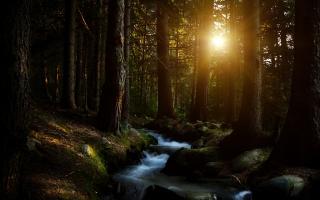 Forest Water Stream