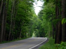 George Washington National Forest Wallpaper Landscape Nature
