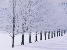 Glimmerglass State Park Wallpaper Winter Nature