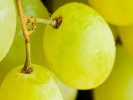 Gold grape Wallpaper Other Nature