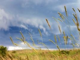 Grass Rainstorm Wallpaper Plants Nature