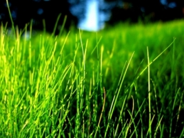 Grass Wallpaper Plants Nature