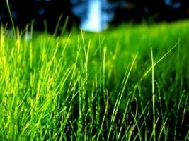 Grass Wallpaper Plants Nature